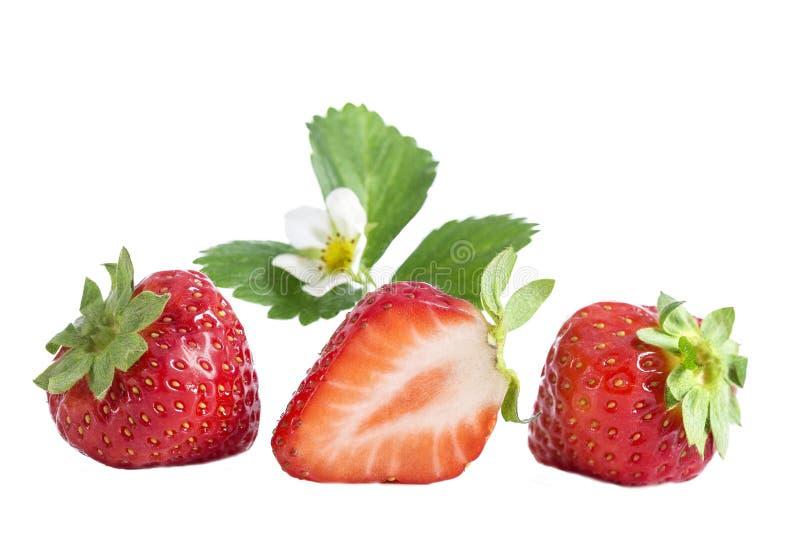 Fresas aisladas Tres frutas de la fresa, una cortaron por la mitad con la flor aislada en el fondo blanco imagenes de archivo
