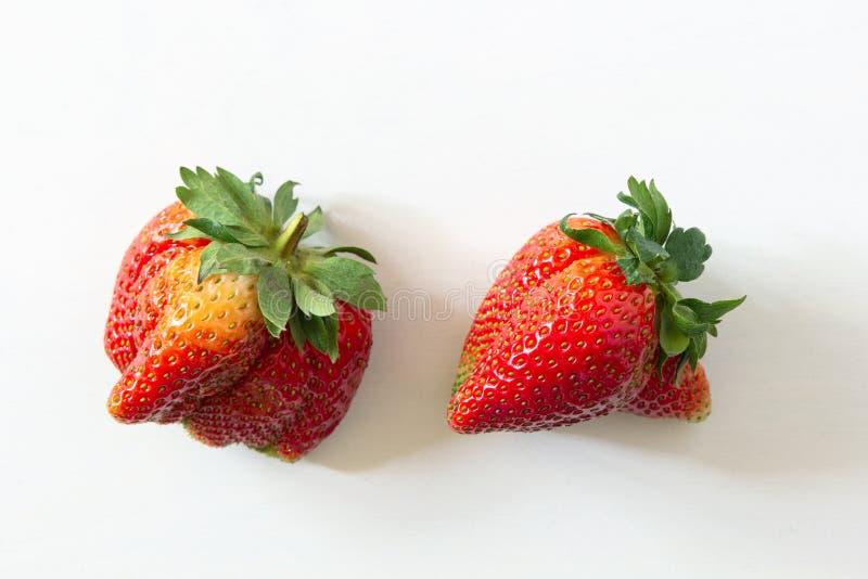Fresas de cosecha propia orgánicas feas en el fondo de madera blanco Frutas y verduras imperfectas divertidas extrañas, producció fotografía de archivo libre de regalías