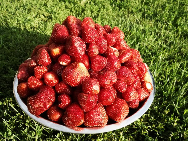 Fresas frescas hermosas con un gusto brillante en la hierba fotos de archivo