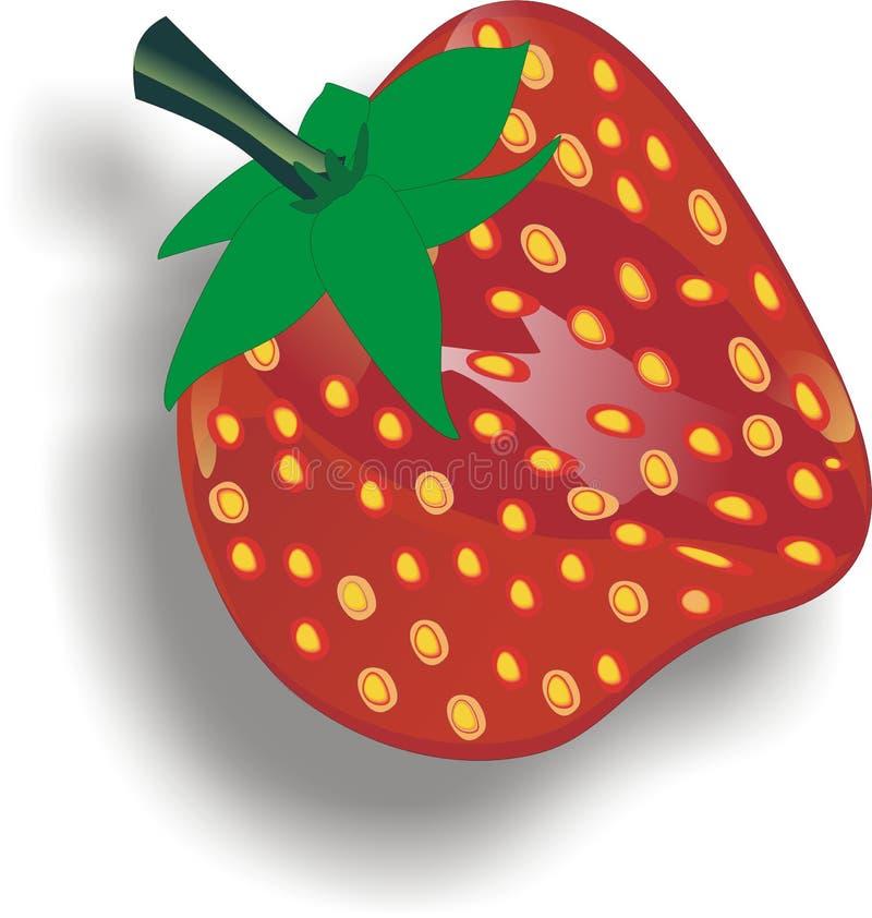 Fresas - fruta de las plantas de la Fragaria stock de ilustración
