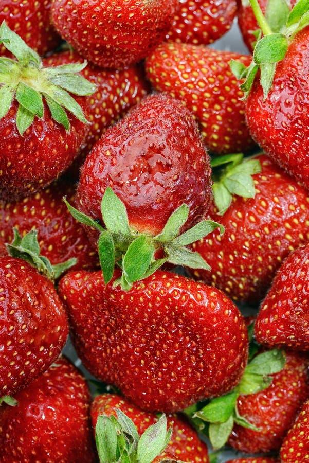 Fresas jugosas frescas fotografía de archivo libre de regalías