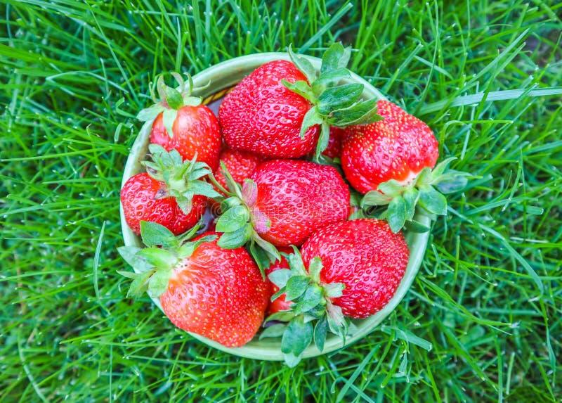 Fresas jugosas rojas maduras grandes en un cuenco en la hierba verde Concepto sano de la comida del verano fotos de archivo libres de regalías