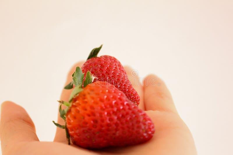 Fresas maduras a disposici?n foto de archivo libre de regalías