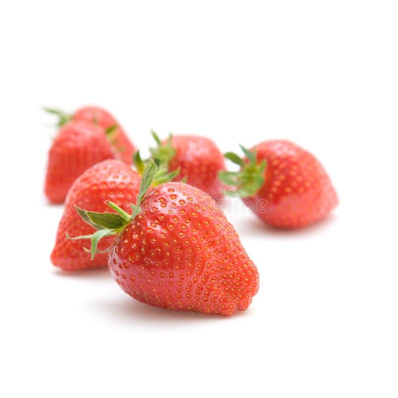 Fresas maduras rojas frescas fotografía de archivo libre de regalías