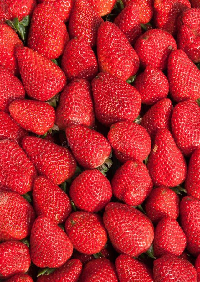 Fresas orgánicas fotografía de archivo libre de regalías