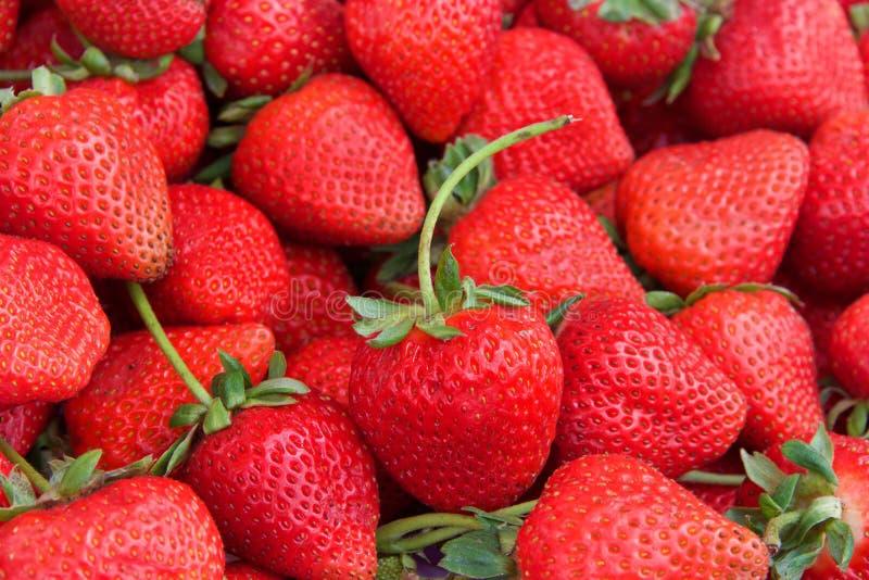 Fresas orgánicas frescas de la visión superior imagen de archivo libre de regalías