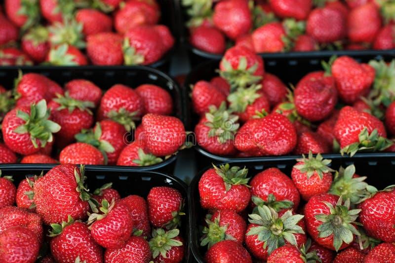 Fresas orgánicas naturales en cajas en el mercado de los agricultores fotografía de archivo