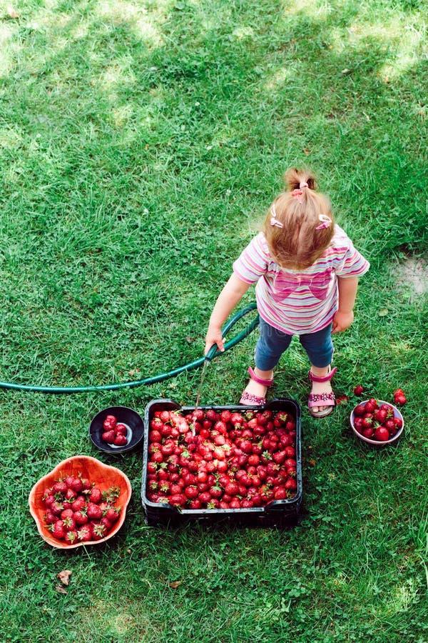Fresas que se lavan de la niña imágenes de archivo libres de regalías