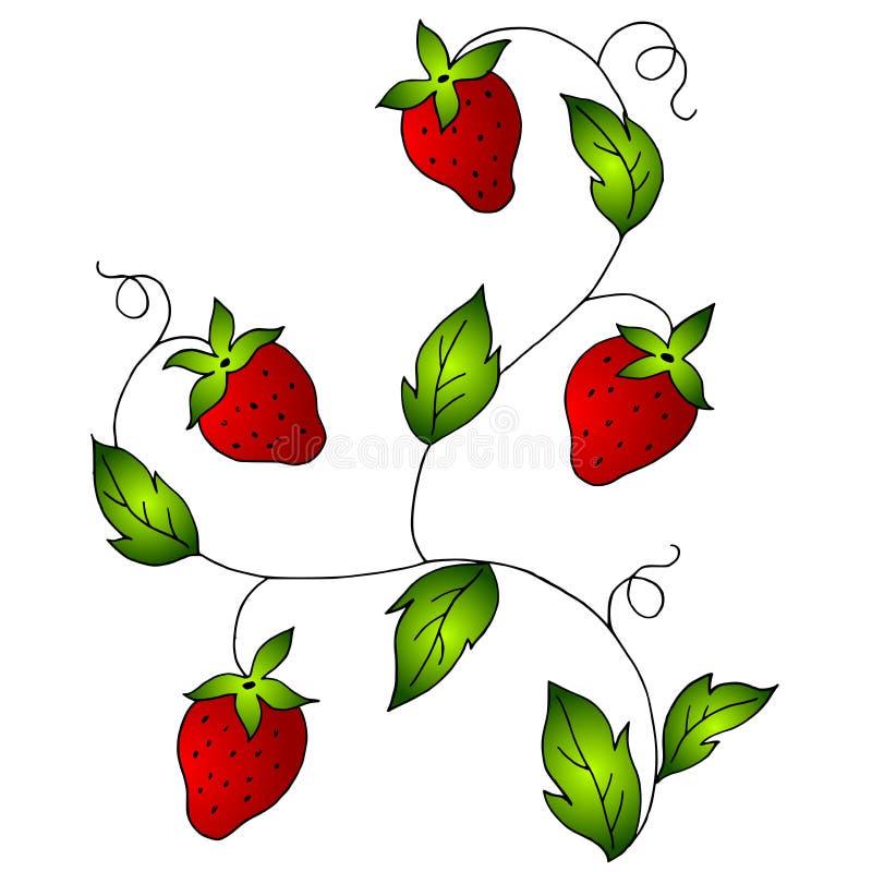 Fresas rojas brillantes en vid stock de ilustración