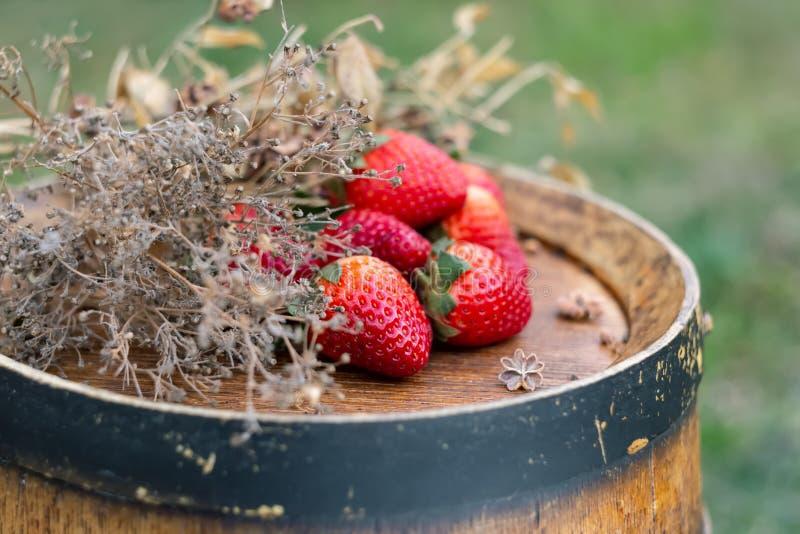 Fresas rojas, hierba seca en un barril de vino de madera en el jardín en primavera imagenes de archivo