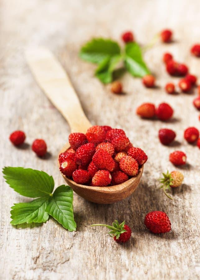 Fresas salvajes dulces frescas en una cuchara de madera imagen de archivo libre de regalías