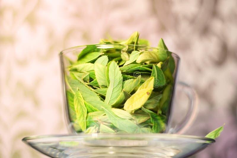 Freschezza del tè verde fotografie stock