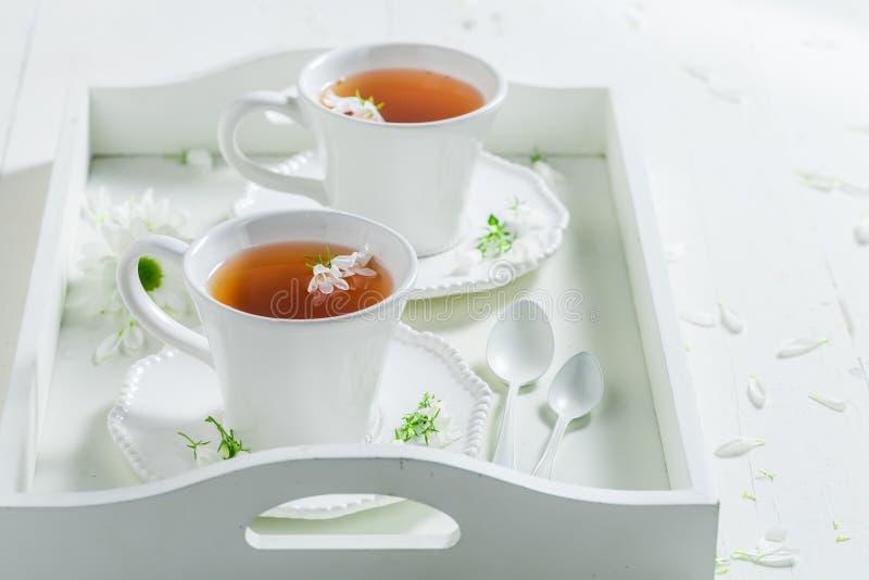 Fresco alla tazza di tè con miele con la molla fiorisce immagini stock libere da diritti