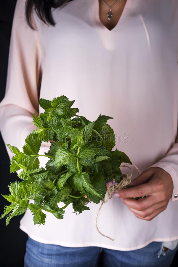 Fresco crezca la cosecha orgánica verde de la planta de la hoja de la menta del manojo a disposición foto de archivo libre de regalías