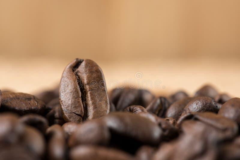 Fresco dei chicchi di caffè arrostito immagini stock libere da diritti