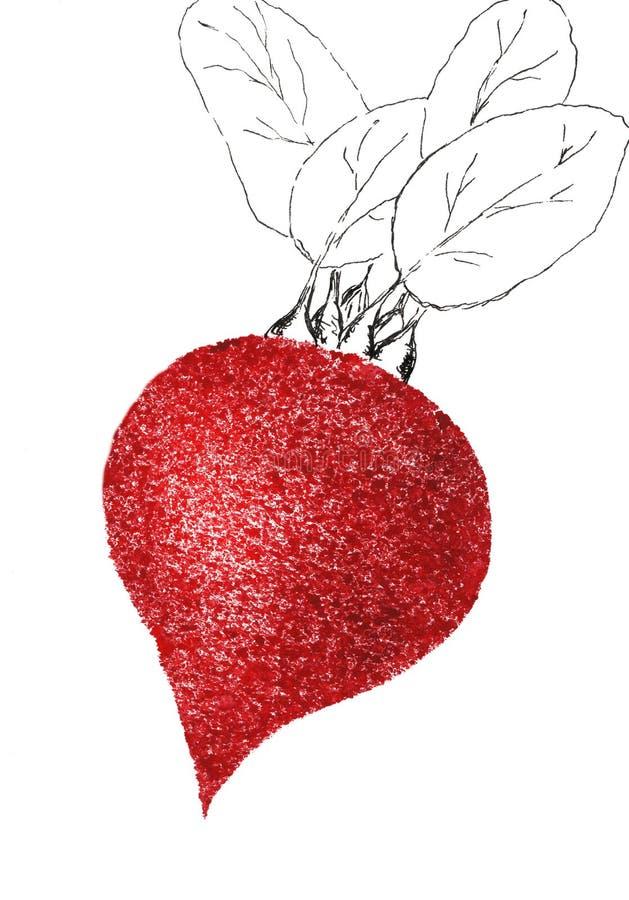 Fresco jugoso de Borgoña de la salud de la granja del ejemplo del dibujo de la comida del bosquejo de la acuarela de las verduras stock de ilustración