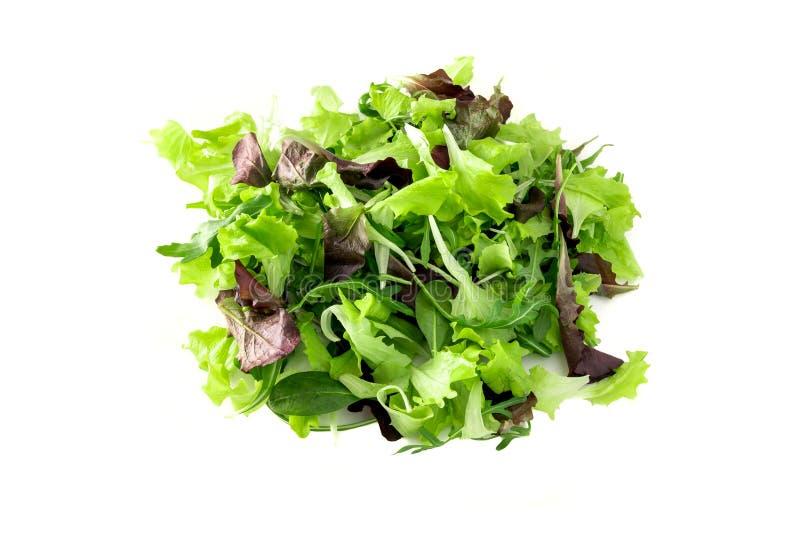 Fresco mezcló las hojas de la ensalada verde, aisladas en el fondo blanco imagenes de archivo