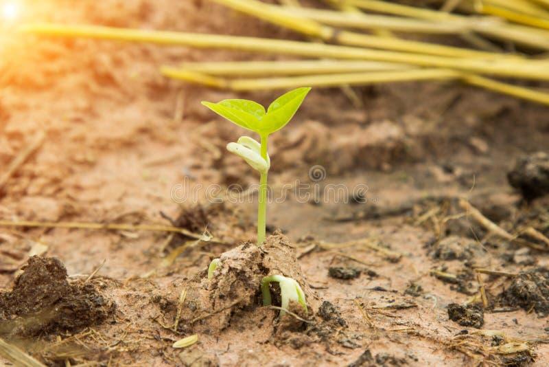 Fresco verde da árvore no solo fértil sobre o fundo do verão imagem de stock royalty free