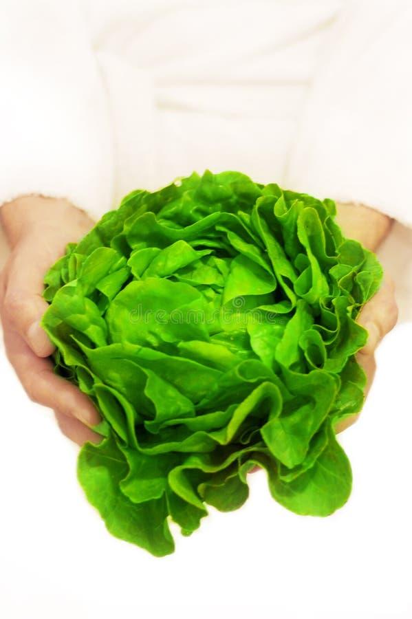 Frescor - salada verde fotografia de stock