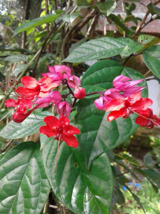 frescura de flores imagen de archivo libre de regalías