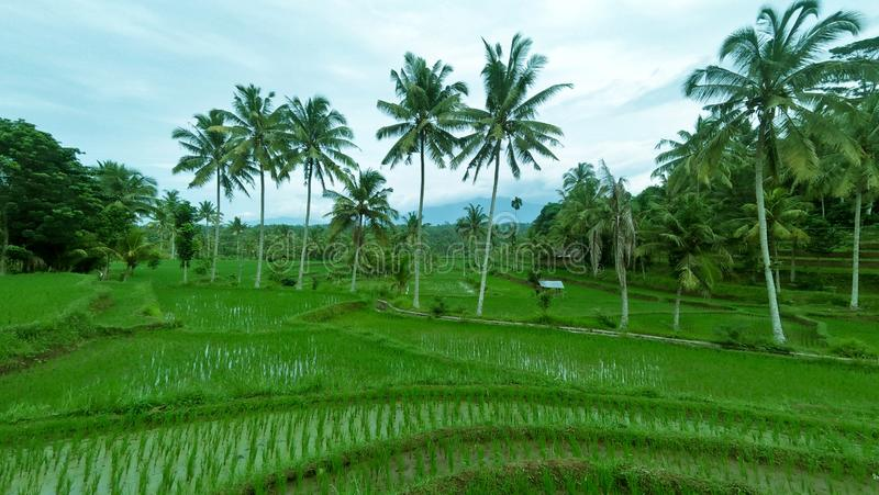 Fresh air at rice field stock images