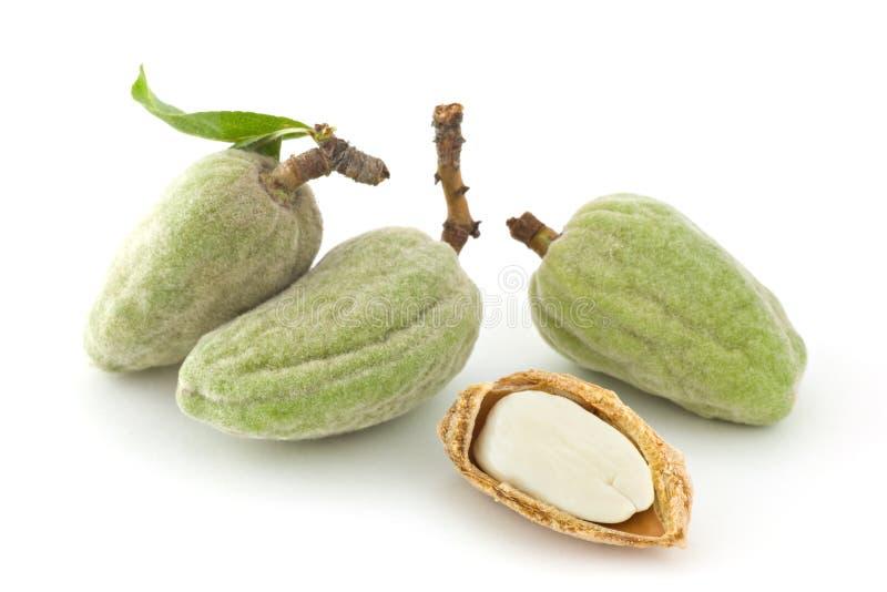 Download Fresh almonds stock image. Image of food, energy, cream - 2703027