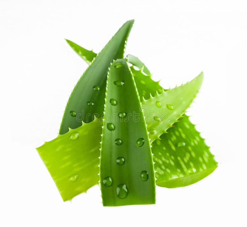Fresh aloe vera leaves with water drops isolated on white stock images