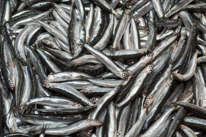 Fresh anchovies at the fish street market, Istanbul stock image
