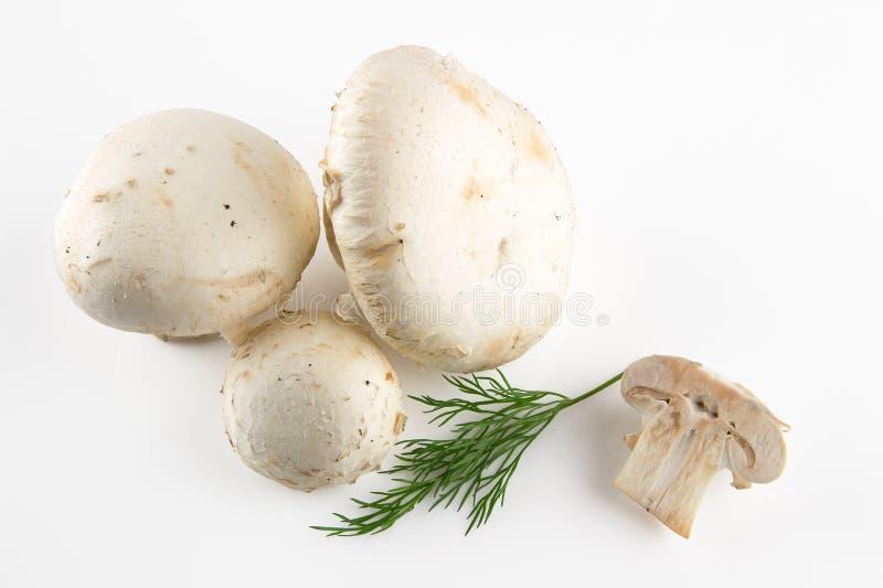 Fresh and appetizing mushrooms. Isolated on white royalty free stock photos