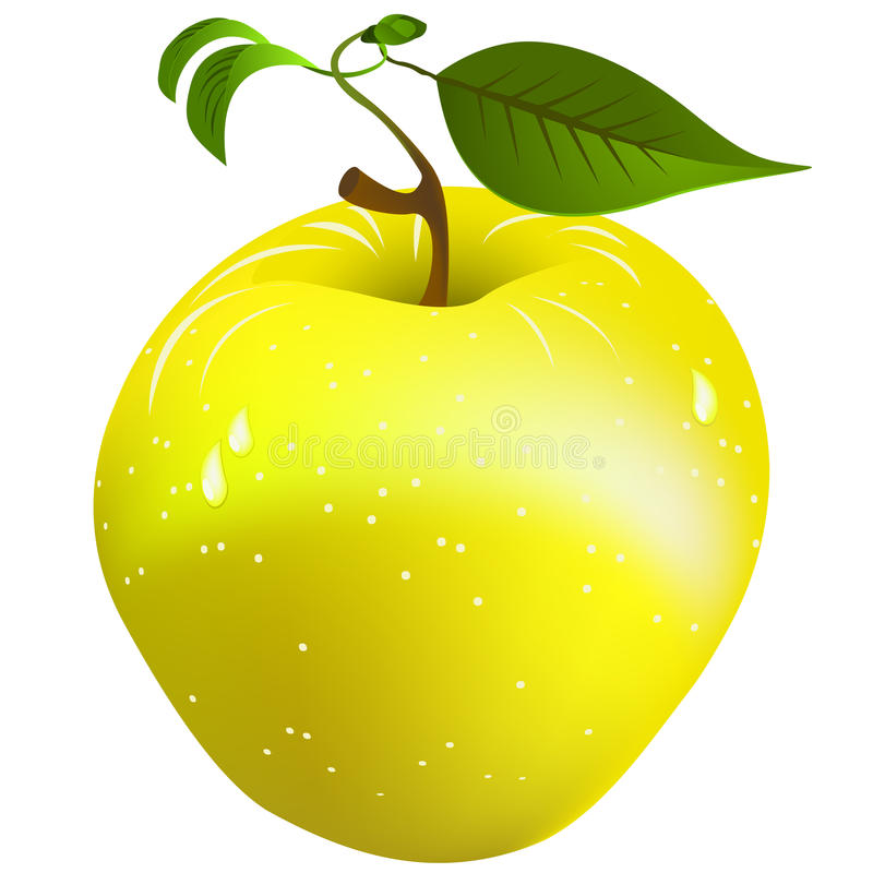 Download Fresh apple stock vector. Image of tail, vegetarian, branch - 20373791