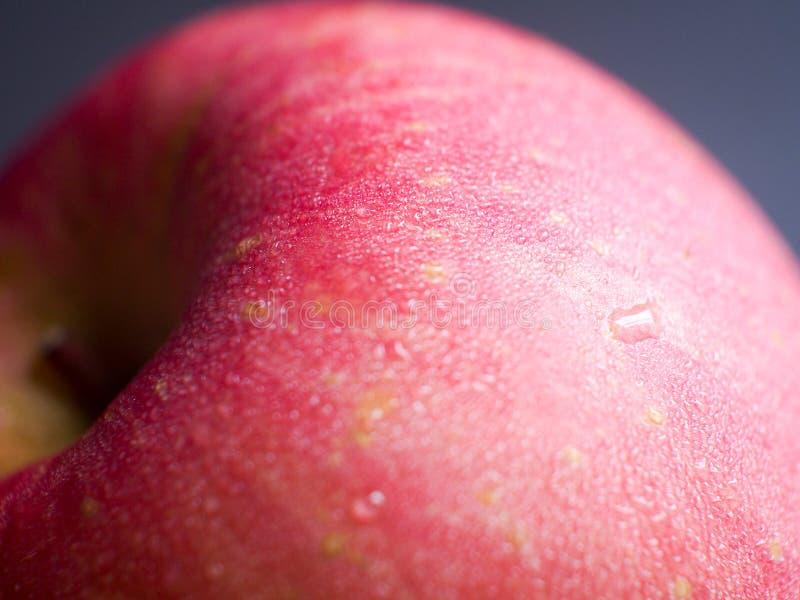 Fresh Apple macro stock photos