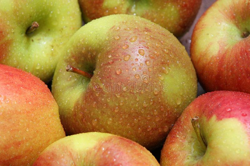 Download Fresh Apples stock image. Image of agriculture, organic - 164301