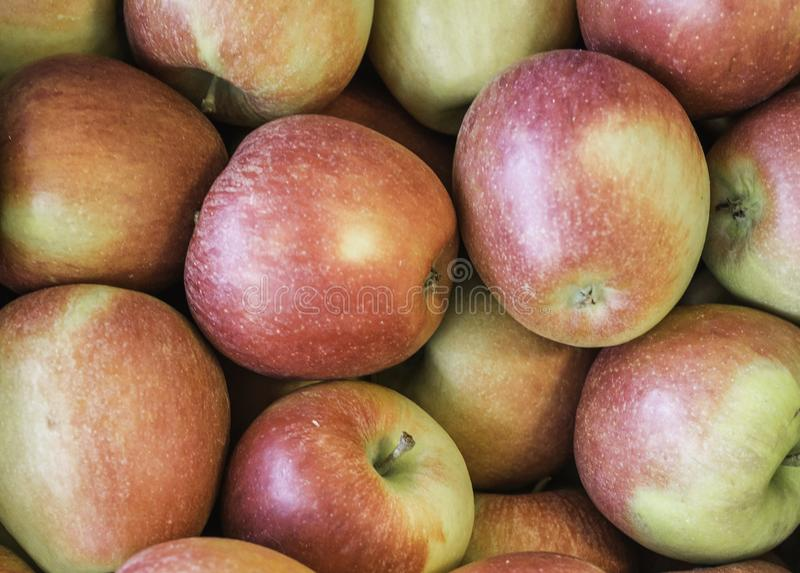 Fresh apples `Braeburn ` variety grown in the apple country South Tyrol, northern Italy royalty free stock image