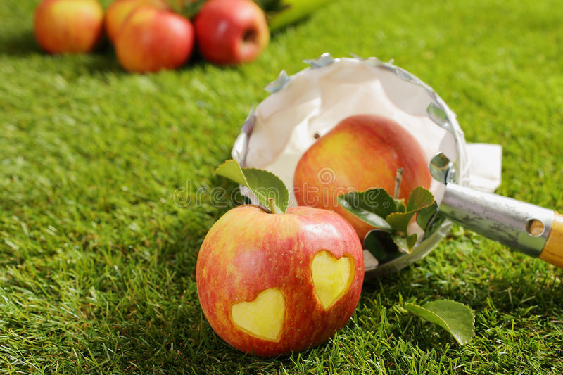 Fresh apples with a pair of hearts stock images