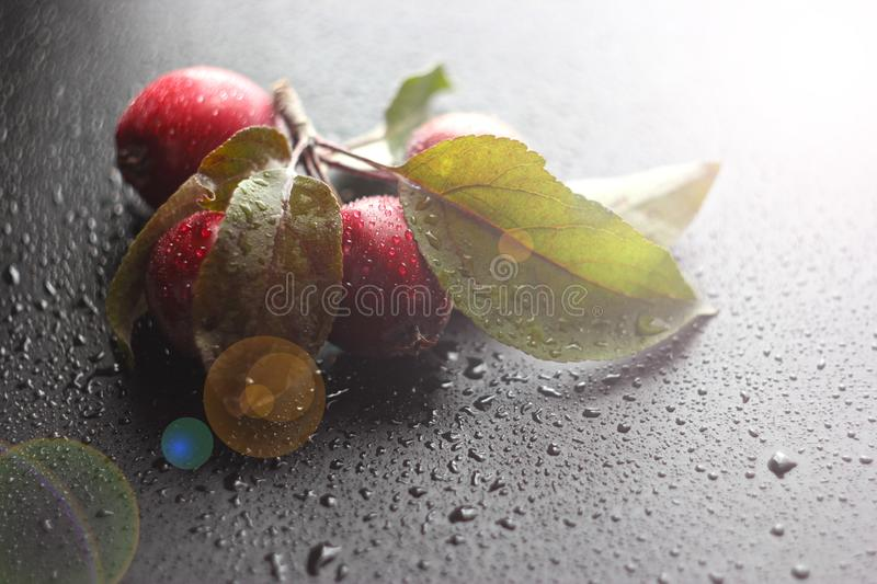 Fresh apples on the old wooden table. Black background. Autumn fruit harvest. toned royalty free stock photos