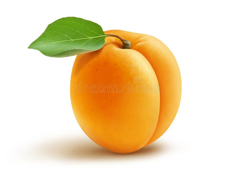 Fresh apricot and leaf stock photography