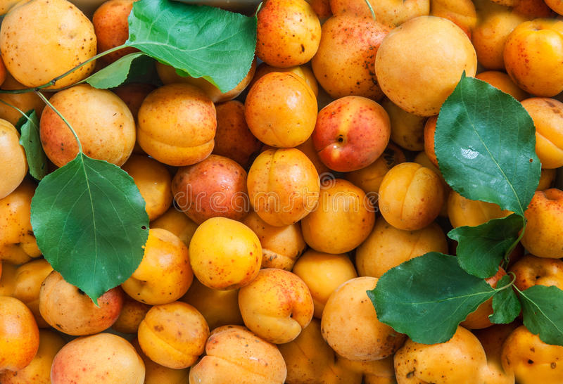 Fresh apricots solid texture seamless background royalty free stock photo