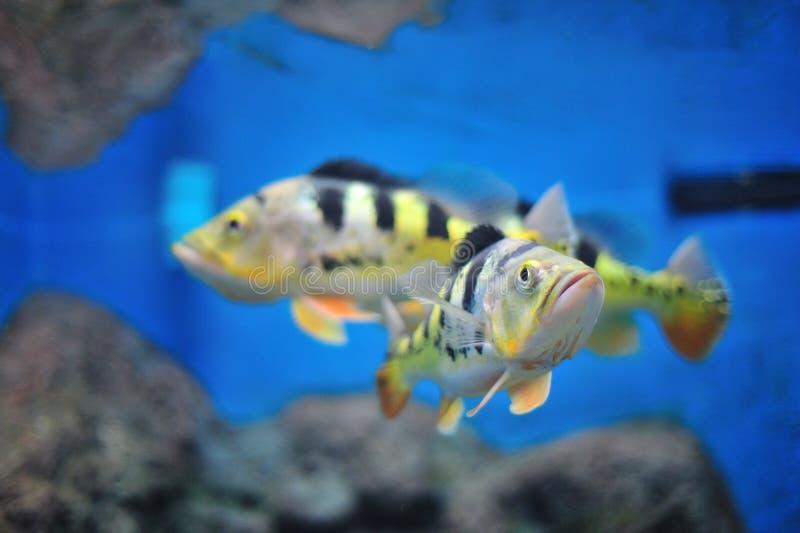 Fresh Aquarium. Fish in the aquarium of the province of Nakhon Sawan, Thailand stock photography