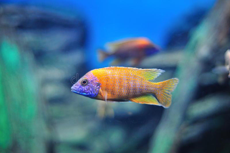Fresh Aquarium. Fish in the aquarium of the province of Nakhon Sawan, Thailand royalty free stock image