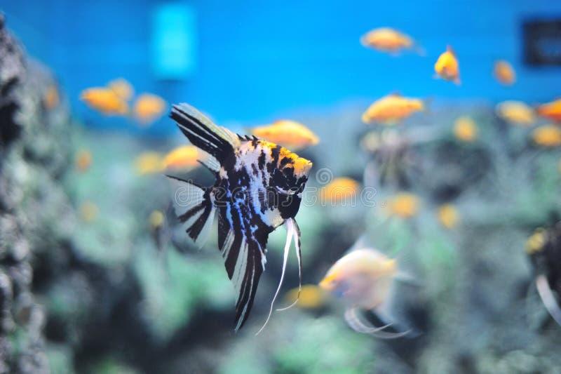 Fresh Aquarium. Fish in the aquarium of the province of Nakhon Sawan, Thailand royalty free stock photos