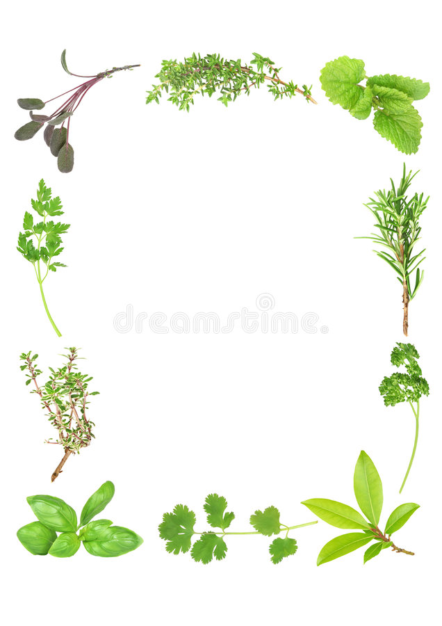 Download Fresh Aromatic Herbs stock image. Image of aroma, border - 6208209