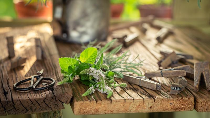 Fresh and aromatic herbs ready to dry stock images