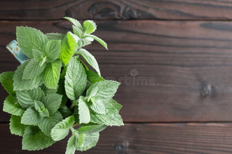 Fresh, aromatic mint stock photography