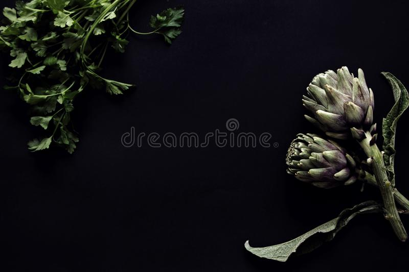 Fresh artichoke with black background royalty free stock images