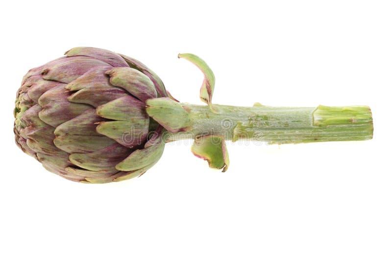 Fresh artichoke isolated. On the white background stock image
