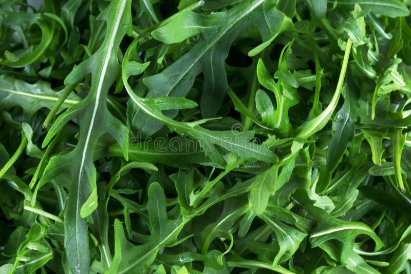 Fresh arugula Eruca, cruciferous plant and cabbage Brassicaceae close-up. Rugula, Indau, Walker, Caterpillar, Roshen Salad - this is useful greens, aphrodisiac royalty free stock photo