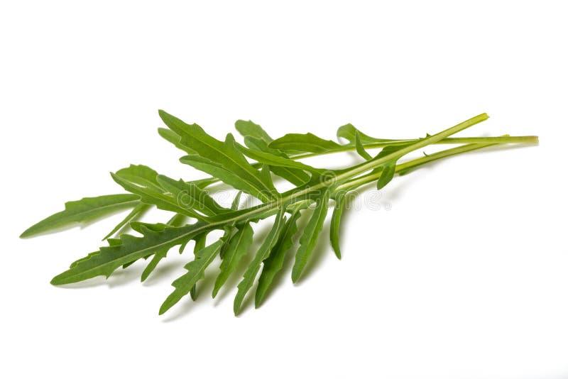 Fresh arugula. Sprig isolated on white royalty free stock photography