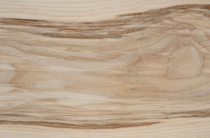 Ash tree wood texture royalty free stock images