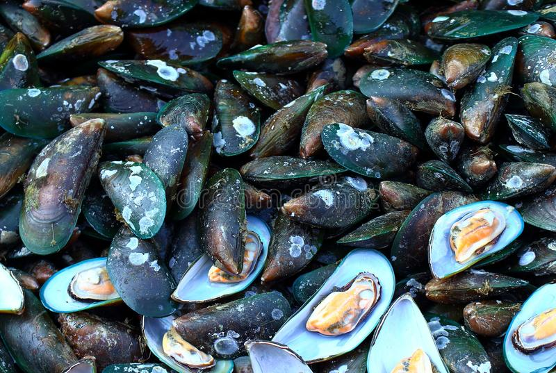 Fresh Asian Green Mussels Thailand stock photo