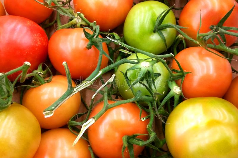 Fresh assorted colorful tomatoes with green leaves and branches background royalty free stock photos